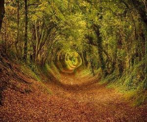 west sussex and ashdown forest image