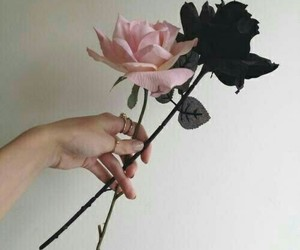 black and rosa image
