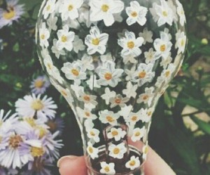bulb, flowers, and tumblr image
