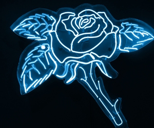 blue, rose, and light image