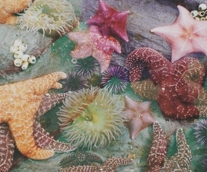 starfish, ocean, and sea image