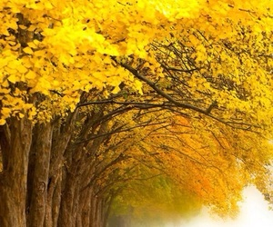 autumn, tree, and yellow image