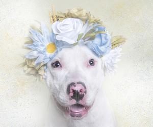 animal, dog, and flower crown image