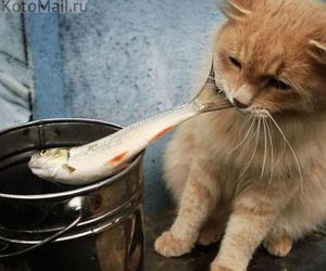 cat and fish image