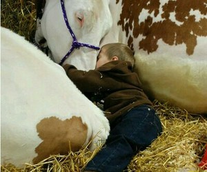 kids, cow, and farm image