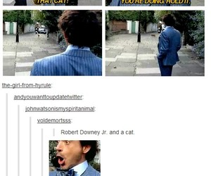 cats and tumblr image