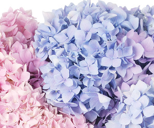 blue, flowers, and pink image