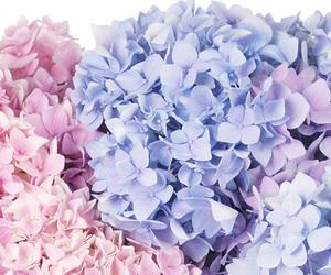 blue, flowers, and rose quartz image