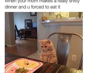 funny, cat, and food image