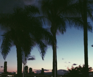 summer, night, and palms image