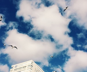 birds, blue sky, and clouds image