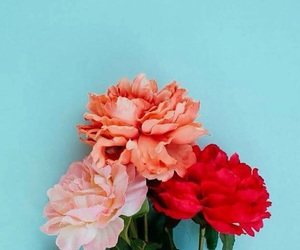 flowers, red, and pink image