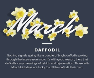 daffodils and march image