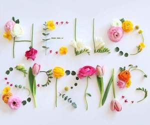flowers, spring, and hello spring image