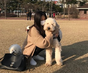 dog, dogs, and korean image