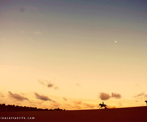 desert, freedom, and horse image