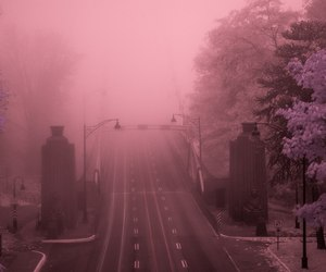 pink, fog, and grunge image