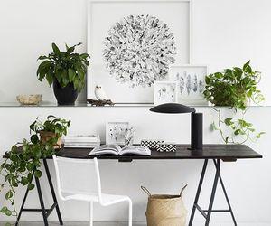 plants, decor, and interior image