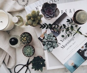 plants, decor, and flowers image