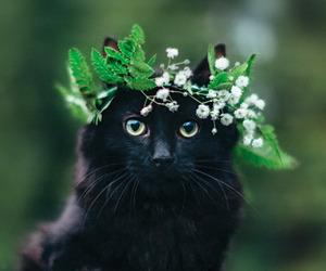 black cat, catnip, and cat image