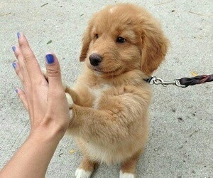 adorable, beauty, and dogs image