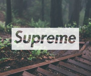 supreme, wallpaper, and trees image