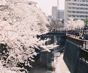 cherryblossom, get lost, and japan image