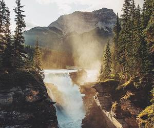 nature, forest, and amazing image