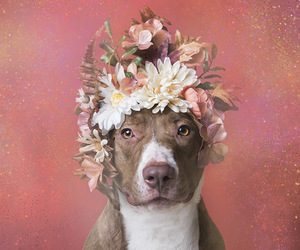 animal, dog, and flower crown image