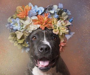 animal, flower crown, and pet image