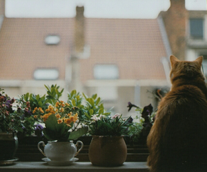 cat, flowers, and vintage image