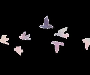 bird and overlay image