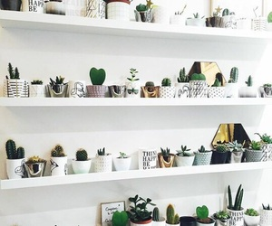 plants, cactus, and white image