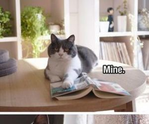 funny, cat, and humor image