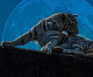 tigre blanco image