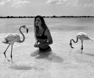 girl, flamingo, and beach image