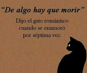 love, frases, and cat image