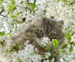 cat, eyes, and flower image