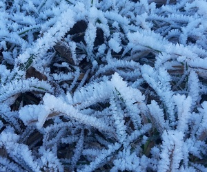 cold, gras, and morning image
