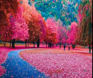 autumn, colores, and belleza image