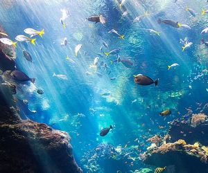 water colors fishes sea image