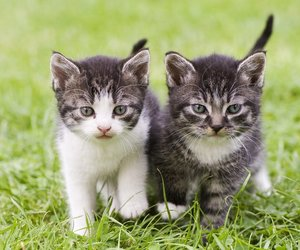 animal, cat, and adorable image