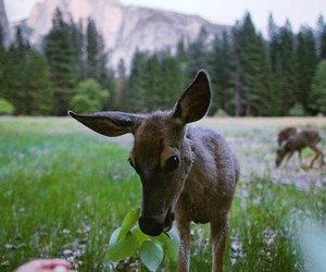 deer, flowers, and nature image
