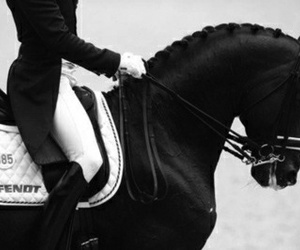 horse, black, and equestrian image