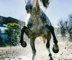 dirt, fast, and horse image