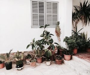 plants and nature image