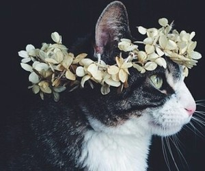 flowers, animal, and cat image