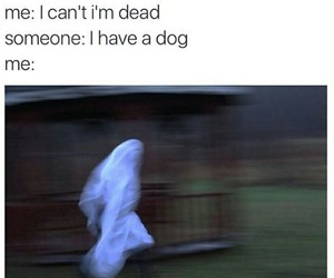 funny, dog, and ghost image