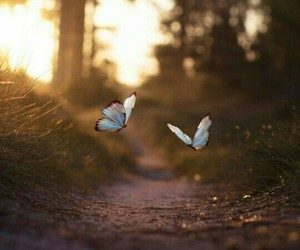 beautiful, butterfly, and blue image