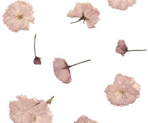 overlay, flowers, and png image